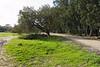 Hedera Forest, Israel (Mark Lukoyanichev) Tags: forest israel nikon hedera hellmaker hederaforest