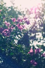 on a walk II (phishpot) Tags: flowers plants color love leaves garden lost mood loneliness colours bokeh dream dreams romantic dreamy mumbai longing faraway creamybokeh nikond40x phishpot