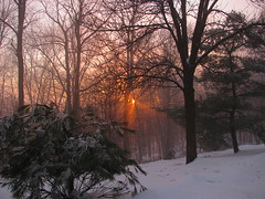 Icy sunset (sblinn) Tags: trees winter sunset sun snow cold tree ice fog night forest evening newjersey nj somerset bedminster somersetcounty