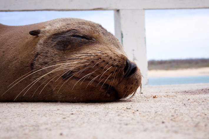 012311_firstSeaLion