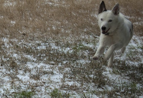 Snow Day at Home 16 - Blue Running
