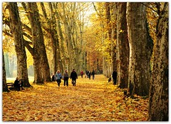 Autumn Tuebingen (Habub3) Tags: park city travel autumn light shadow people sun holiday plant flower tree fall texture nature leaves yellow forest wow germany landscape deutschland gold vanishingpoint flora nikon europa europe map path walk urlaub laub herbst natur pflanze menschen foliage just gelb stadt blatt landschaft wald bltter bume tuebingen baum vacanze weg allee spaziergang tbingen mensch d300 2011 platanen laun habub3 mygearandme platenenallee