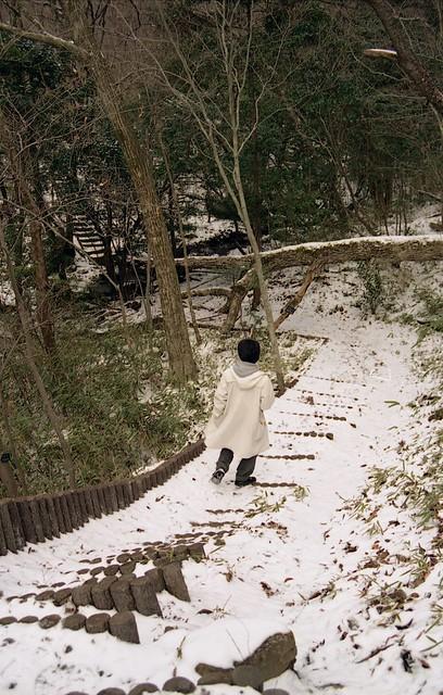 雪の木階段のフリー写真素材