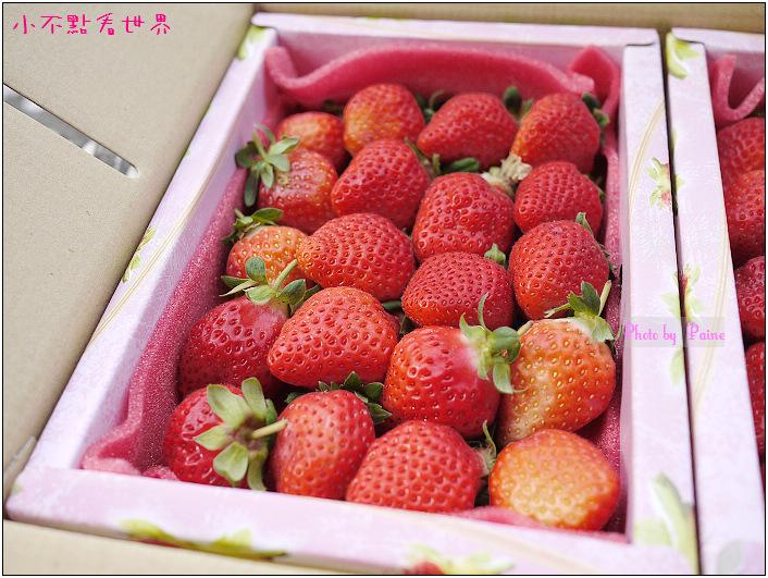 甜柿先生-草莓 (4).JPG