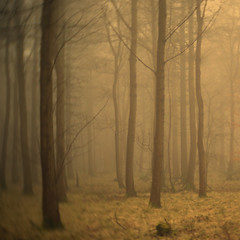 Forest IV (Andrew Lockie) Tags: winter light england forest square landscape countryside woods woodlands mood broadway cotswolds mystical escarpment cotswold snowshill
