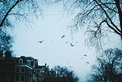 Better run, (thisisforlovers) Tags: blue trees winter sky cold amsterdam birds flying cloudy grain