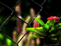 separated (e.nhan) Tags: flowers light flower art nature closeup colours dof bokeh backlighting enhan