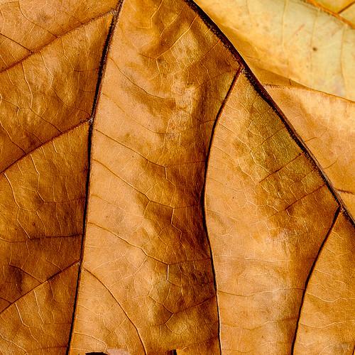 Fallen Leaf Texture