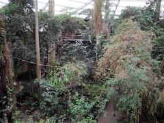 Henry Doorly Zoo - Lied Jungle (fkalltheway) Tags: nebraska omaha henrydoorlyzoo liedjungle omahashenrydoorlyzoo fkalltheway