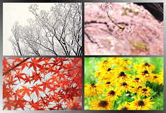 The four colors (y2-hiro) Tags: flowers trees colors leaves collage japan four nikon seasons ricoh d300 grd2 d3s