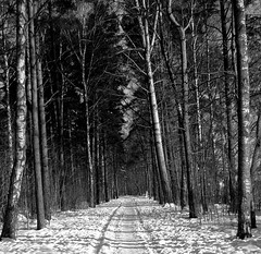 Woods (Nin) Tags: wood trees winter snow forest sweden