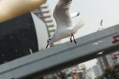 110227_114__MG_7298 (oda.shinsuke) Tags: bird