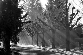 silence @ cemetery sihlfeld zurich; part 5