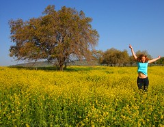 Israel - Spring Joy (lovemyblackcat) Tags: flowers nature field yellow forest landscape israel jump oak meadow hike