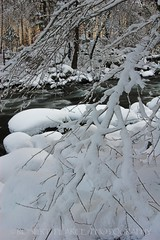 Snow Webbed Branch and Merced River,  February 20, 2011 (Robert Pearce Photography) Tags: california trees winter snow river branches web yosemite february yosemitevalley mercedriver webbed goldenglow 2011 flowingwater nikond200 robertpearce robertpearcephotography
