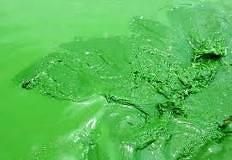 藍藻油-20100908145659_m