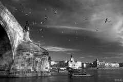 Charles Bridge and the birds / Karlv most a ptci (Jirka Chomat) Tags: city bridge bw bird river czech prague prag praha praga most czechrepublic charlesbridge bohemia vltava karlvmost msto ptci eka svtlo ernobl pil ledolamy