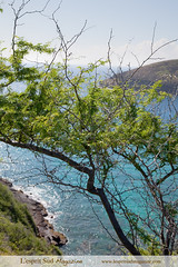 Hanauma Bay nature preserve, Oahu HI (Scrumptious Venus) Tags: travel beach magazine hawaii pacific oahu snorkeling scubadiving guide hanaumabay reef beautifulbeach polynesian hawaiianbeaches eastoahu windwardcoast southeastoahu paradisiacalbeaches lespritsudmagazine hanaumabaynaturalpreserve