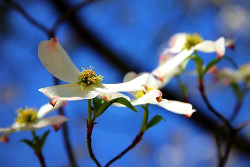 Hope in Full Blossom