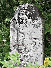 Tom Nuck (jimsawthat) Tags: abandoned cemetery alaska rainforest village gravestone enhanced klukwan