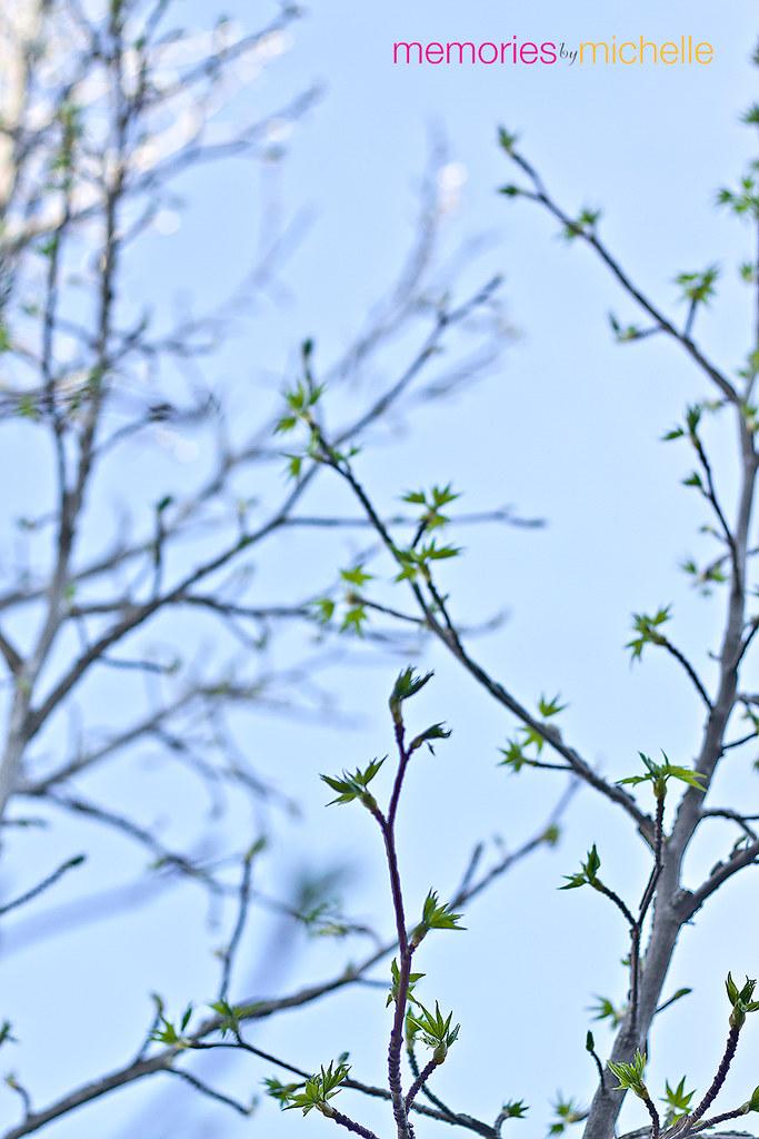 Random-Spring3