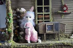 Nabiyette Bunny with bunnies