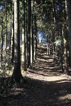 堂所山の稜線の道