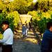 gite pays cathare accueil vigneron aude montbrun des corbières