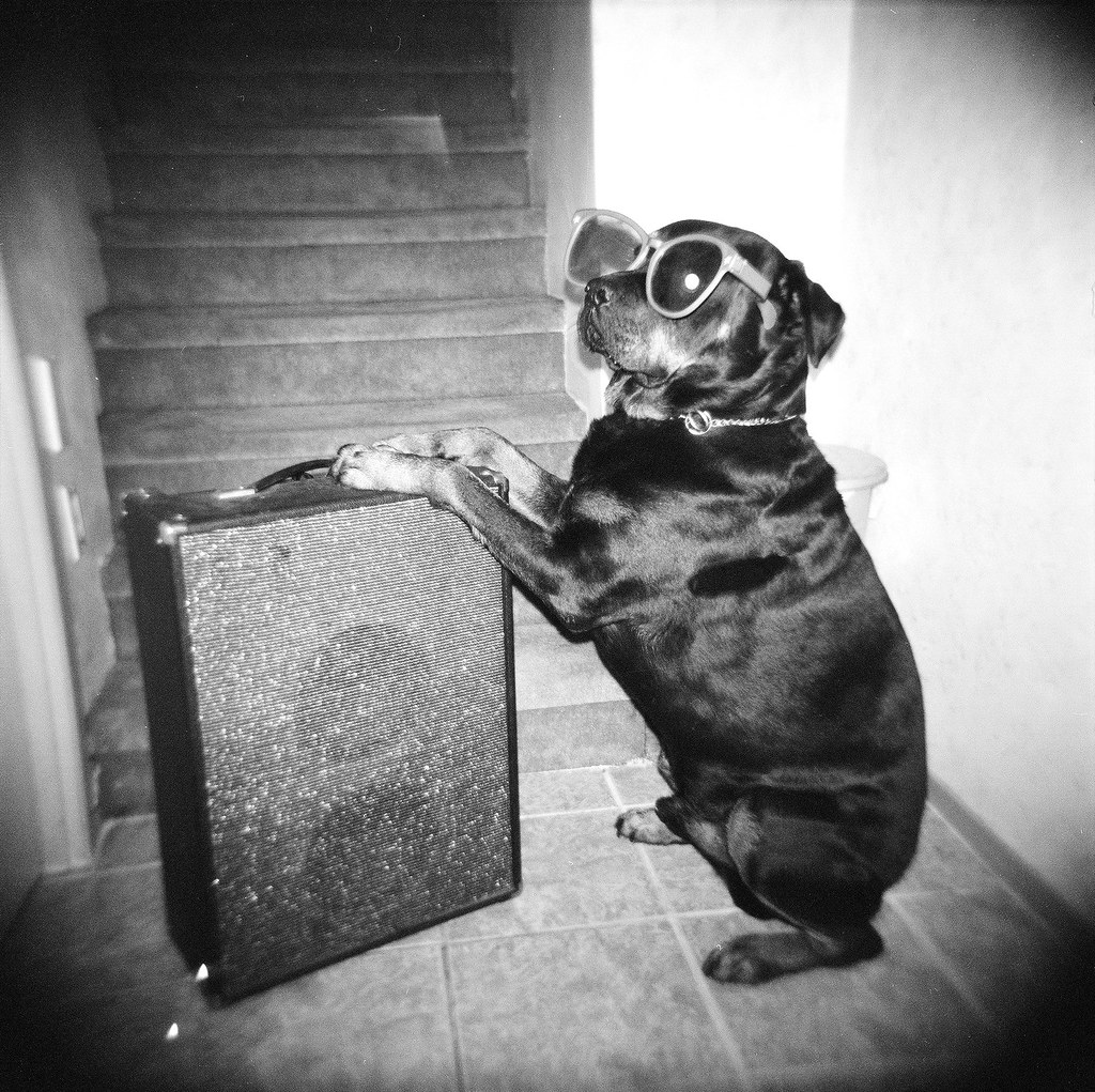 DJ Rottweiler