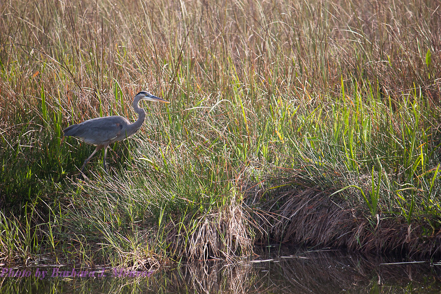 Everglades National Park (7 of 40)