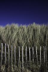 Oyat #1 (ur.bes) Tags: belgique belgium canon eos 600 600d oyat ciel sky bleu blue haie barriere
