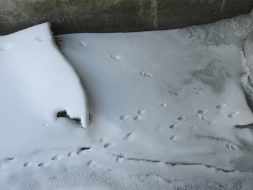 the ice under the bridge