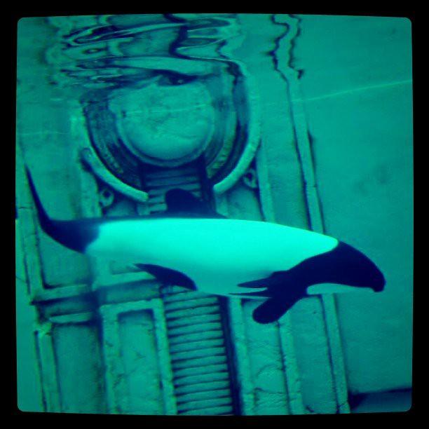 这是海豚么。  话说ps的水下滤镜颜色真接近这个水下