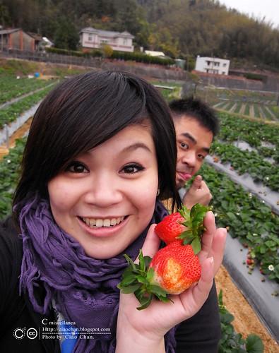 大湖草莓之旅 - 大力推薦 大山農園 R1039322