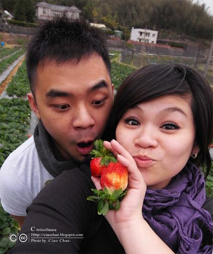 大湖草莓之旅 - 大力推薦 大山農園 R1039323