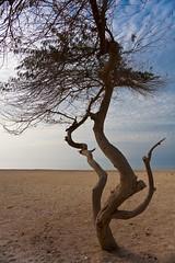 Al Jazaer beach 05 (potomo) Tags: city winter beach canon island town persian bahrain sand asia warm gulf january middleeast kingdom arab manama calmness aljazair bahrein 2011 eos5d manamah michelesolmi seaafternoon