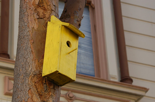 3bird-house.jpg