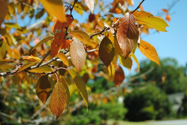 Pre-Fall 1