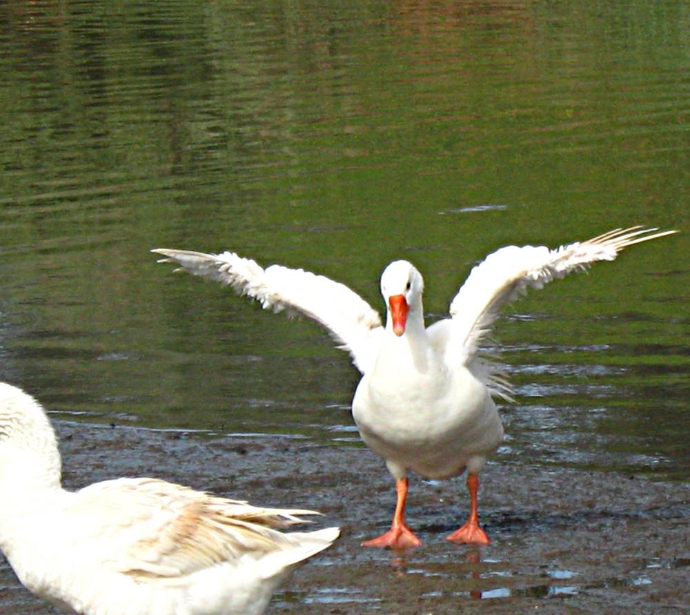 29-01-2011-wings2