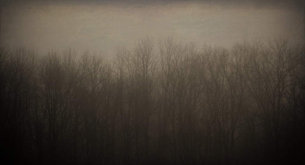 Tree Line in the Fog