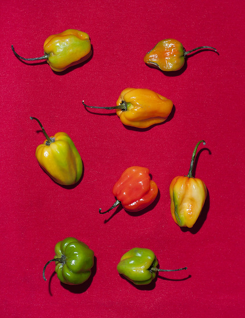 chili_peppers_01