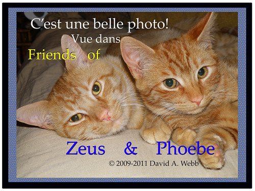 Friends Of Phoebe & Zeus