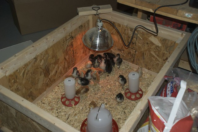 Brooder Box
