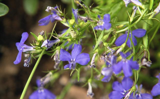 紫の花のフリー写真素材