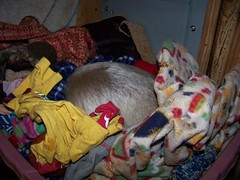 Pua sleeping in the pet basket