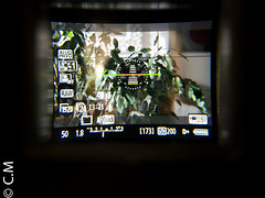 MagFinder_MonitorX_Canon7D-13.jpg