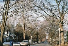 Beautiful morning (Julio Barros) Tags: street morning blue trees sky color cars film 50mm nikon fuji superia iso400 f18 xtra c41 homedeveloped n2020