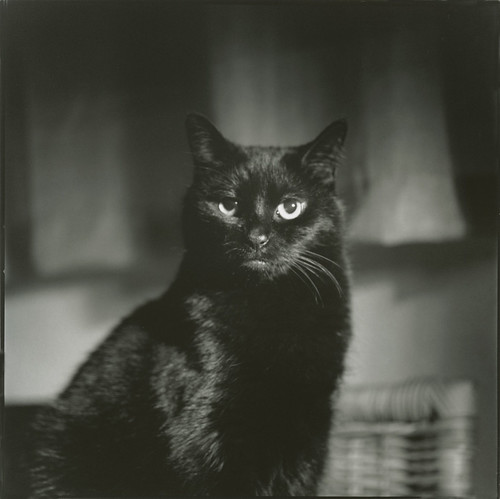 Black cat - portrait no. 1 - 7 point