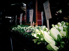 Herbs and Veggies for sale at Silver Lake Farmers' Market
