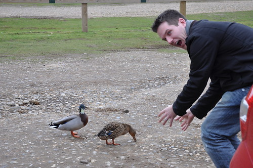 Chasing Ducks in Wells!